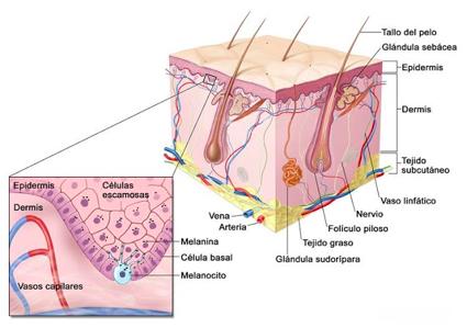Lunares versus Melanoma 3